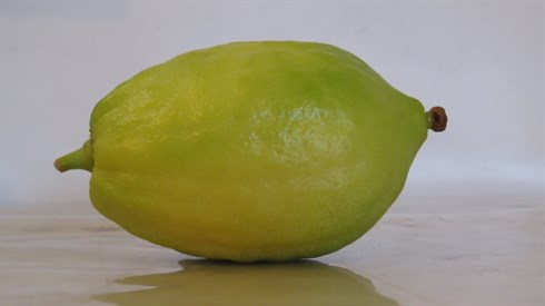 How to choose an Etrog