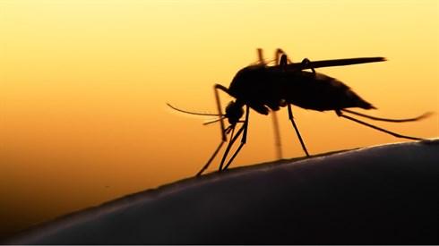 קוטל חרקים בבית כנסת