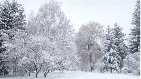 הלכות שלג